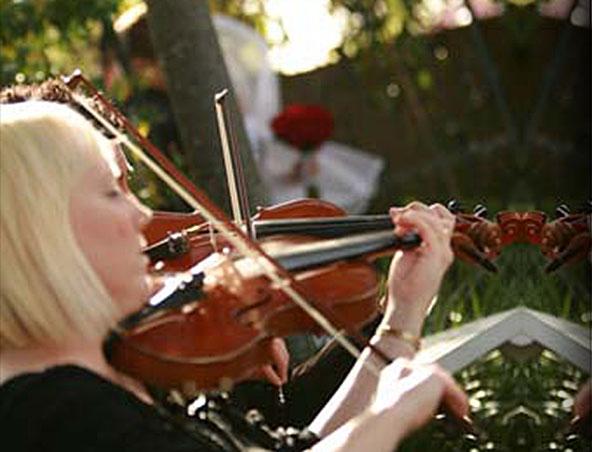 Stirling Strings String Quartet - Musicians